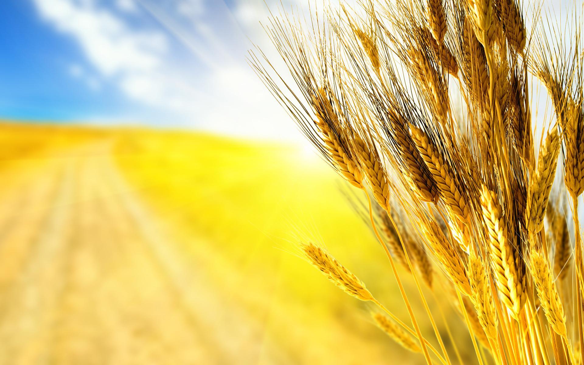 """Египет станет """"хабом"""" для российского зерна"""